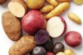 Вчені шукають стійкість картоплі у її диких предків