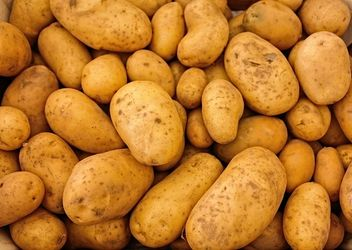 Європейські картоплярі прагнуть зменшити площі вирощування