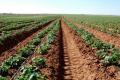 Картопля на зрошенні потребує додатково 30 тис. грн/га, – фермер