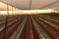 Фермери цікавляться нетхаусами для овочів