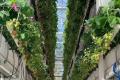 Багатоярусне вирощування полуниці обіцяє економію ресурсів на будівництво та обігрів теплиці