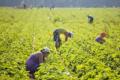 У Польщі для сезонних працівників скасували 14-денний карантин