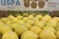 Карантин спонукав експортера яблук підключитися до роботи на внутрішньому ринку