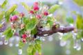 Експертка розповіла про втрати яблуневих садів від заморозків