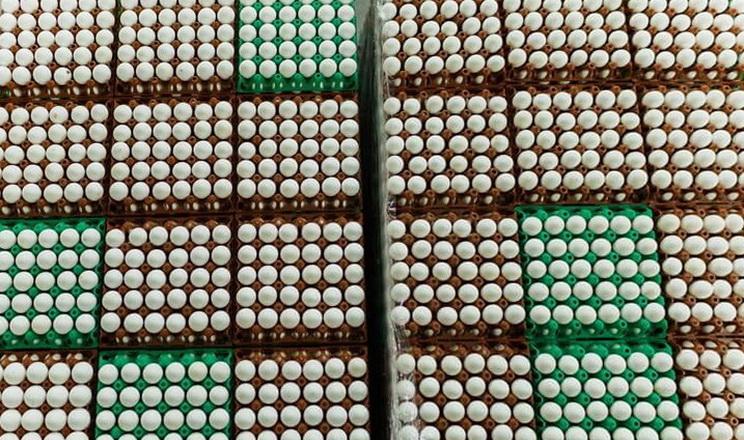 У січні-квітні експорт українських яєць скоротився на 30%