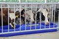 Villa Milk запустила роботизовану ферму на Вінниччині