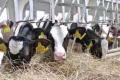 «Воскобійники» планують експортувати молоко до Китаю