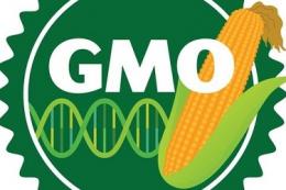В Мінекономіки створили робочу групу з питань регулювання ГМО