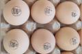Розтин інкубаційних яєць із живими зародками дозволяє оцінити розвиток ембріонів
