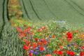У Німеччині скорочується біорізноманіття рослин, - дослідження