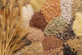 В Україні існує дефіцит насіння культур вітчизняної селекції