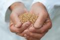 Важливі нюанси в обробці насіння біопрепаратами