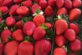 У Польщі прогнозують високі ціни на суницю садову