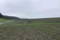 На Львівщині ярими зерновими засіяно вже 13,4 тис. га площ