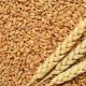 Україна посіла друге місце у світі після США за експортом зерна у 2019/20 МР