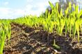 Названо спосіб, який допоможе рослинам вижити в посуху