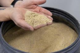 У майбутньому комах і мікроводорості можуть використовувати як корм для бройлерів