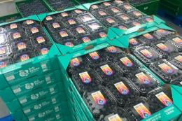 Кооператив виробників лохини експортував ягоду в Об'єднані Арабські Емірати
