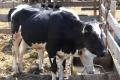 Кількість інвесторів проєкту «Сімейні молочні ферми» збільшилася до 280