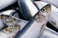 У І півріччі промисловий вилов риби у внутрішніх водоймах скоротився на 41%