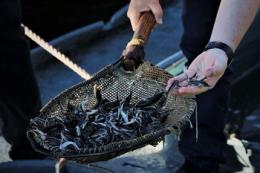 За рахунок держбюджету торік у водойми України вселено понад 16 млн екземплярів молоді риб