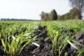 Глинисті агромінерали впливають на процеси нітрифікації в ґрунті