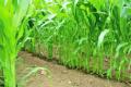 Урожайність культур не є показником ефективної роботи господарства, – думка