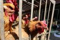 Китай припинить продаж живої птиці на сільгоспринках