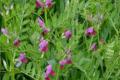 У господарстві «Ярошенко» покращили якість ґрунтів без підживлення