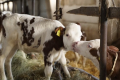 В Україні діятимуть європейські вимоги до благополуччя тварин