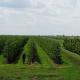 Закладання нових плодових садів в Україні опинилося під загрозою