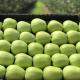 У ФГ «Перфект» вирощують «Інстаграмні» яблука