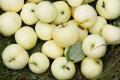 Оприлюднено ціни на ранні яблука в Польщі