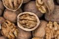 У Каліфорнії вирощуватимуть волоські горіхи без використання хлорпірифосу