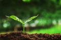 Як правильно порахувати запас азоту в ґрунті