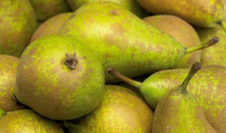 У Європі очікують більший врожай груш на півночі, і менший – на півдні