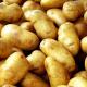 Чипсова картопля на Чернігівщині дає на богарі врожайність 20 т/га, столова –– 30 т/га