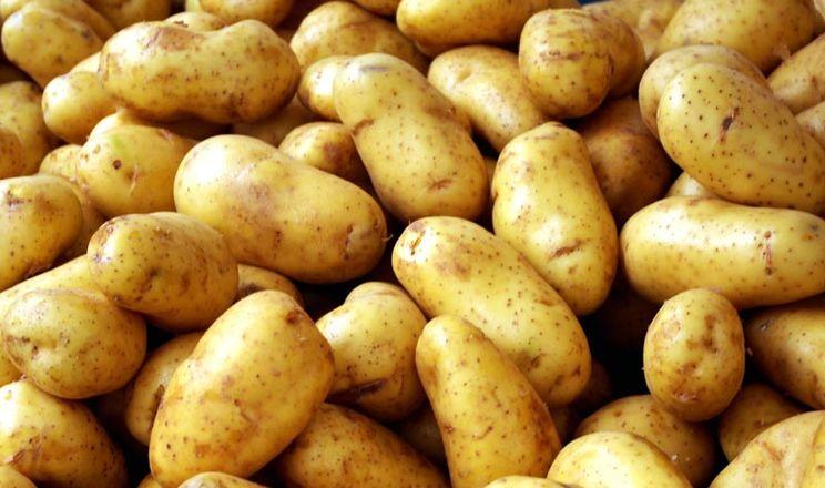 У Польщі зареєстрували новий біологічний засіб проти сходів картоплі