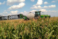 Прогноз урожаю кукурудзи в Україні істотно зменшено