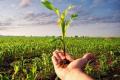 Залізовмісні мікродобрива підвищують стійкість кукурудзи до весняних заморозків, – дослідження