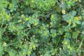 Господарство «Дедденс Агро» поділилось формулою удобрення полів