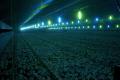Найкращі варіанти монохроматичного освітлення для пташників