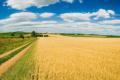 Стало відомо про плани розширення земельного банку агрофірми «П'ятихатська»