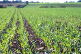 У господарстві «Ярошенко» пояснили, чому віддають перевагу культурам з коротким періодом вегетації