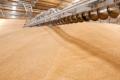 Зерно на складі захистять від лускокрилих вчасно розселені ентомофаги