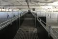 Правильно спроєктовані приміщення свиноферм запобігають випадкам насильства до свиней