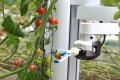 Робот Virgo збирає врожай як людина