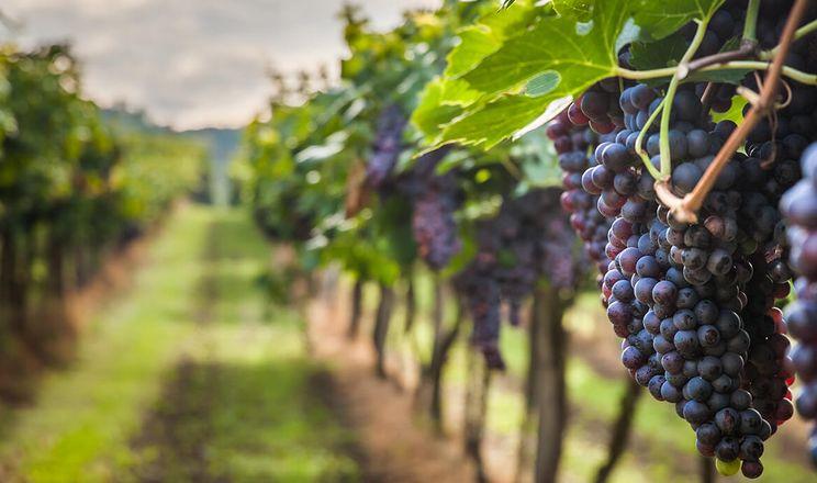 У Мінекономіки хочуть скасувати акцизний збір на натуральні вина
