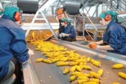 Кожна область здатна забезпечити потреби аграріїв регіону якісним насінням