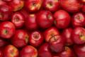 Поляки прогнозують, що експортуватимуть яблука в Україну